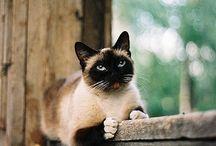 Kittehs / cats, felines, kittens, chat