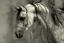 Horses / Horses & all things equine / by Kimberley Cameron