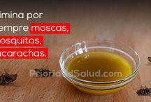 Eliminar moscas cucarachas y mosquitos