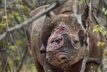 Save SA's Rhino