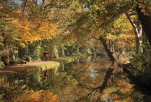 Autumn in the countryside / A celebration of the autumn colours, food and drink in Britain