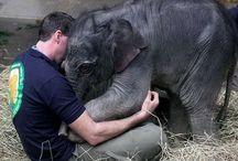 I love elephants  / Enough said / by Samantha Boyd