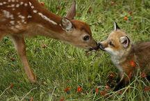 Wildlife bonds