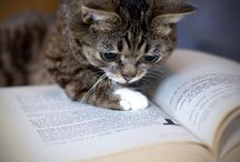 Literary Cats / Cats and books... a natural combination. Just like bread and butter, or tea and toast!