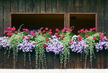 Grădini cu ghivece