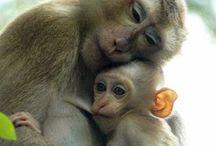 Love in Animals