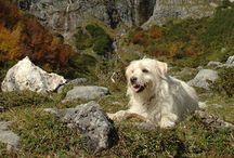 Urlaub mit Hund / Hundefreundliche Unterkünfte, Ausflüge mit dem Hund, Baden mit Hund, Service für Hunde