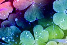 Tekenen-regenboogkleuren / regenboogkleuren