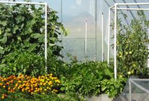 High Performance Gardening / A high performance garden is one of the most fun, productive, and organic gardening experiences you will ever have.