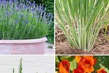 Plants that repel bugs