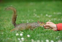 Regent Park squirrel, london