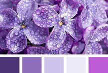Colores / Colores