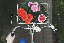 FLOWERS IN MY BIKE BASKET / Happiness is flowers in my bike basket.