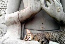 Chat bouddha