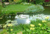 Garden - Garden pond