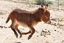 Meet Our Donkeys!