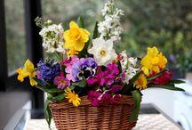 Flores para alegrar seu dia!