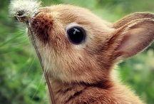 słodkie zwierzątka