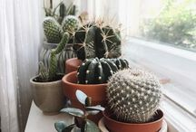 Cactus Lovers