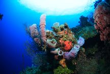 Diving  / Discover the wonders of the 2nd largest barrier reef of the world