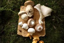 Mushrooms / by Lizbella Molina