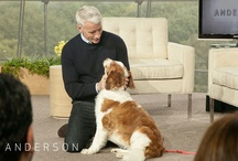 Pets on #AndersonLive / by Anderson Live