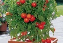 Growing Veges, Fruit & Herbs At Home