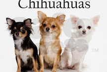 My favorite Chihuahaus / by Sylvia Harris