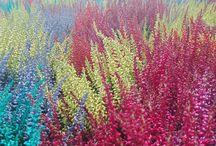 Plantas para vivir el otoño / ¡Porque se puede disfrutar del colorido de las flores y la naturaleza todo el año! Descubre plantas, con flor o sin ella, para vivir el otoño