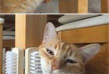 Katzen Zubehör