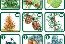 Ağaç türleri örnek