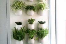 jardin vertical intérieure