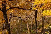 Sonbahar - Autumn