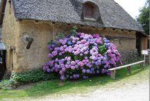 In The Garden / by Lorraine Battle