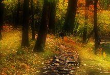 Colori dell'autunno - Autumn