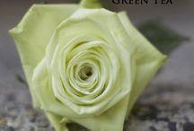 Bridal Roses Green Roses / Rose Varieties