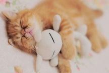 Kitties <3 / by Teyah Lieser