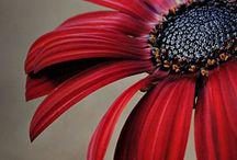 цветы макросъемка