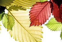Осень (картинки)