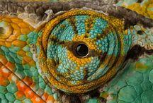 Creature eyes