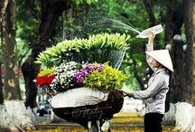 Traveling | Vietnam