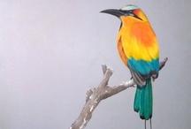 Photography - Birds / Beautiful avian photography