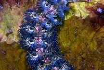Island Insp: Fauna: Underwater
