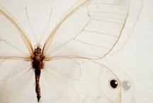 Butterflies*Dragonflies*Moths / by Debbie Pope Akers