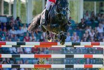 Paardrijden / over paardrijden