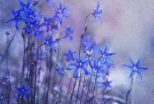 Beautiful photos in Pinterest
