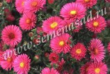 Цветы СП