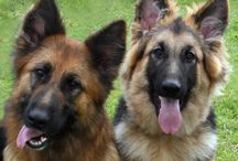 BILDER - Hundar