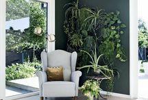 parete piante