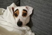 Jack Russel's passion